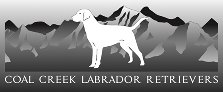 Coal Creek Labrador Retrievers Logo