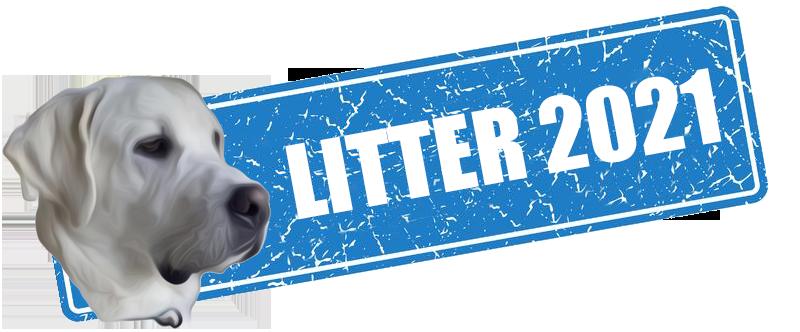 White Lab Puppies - Litter 2021